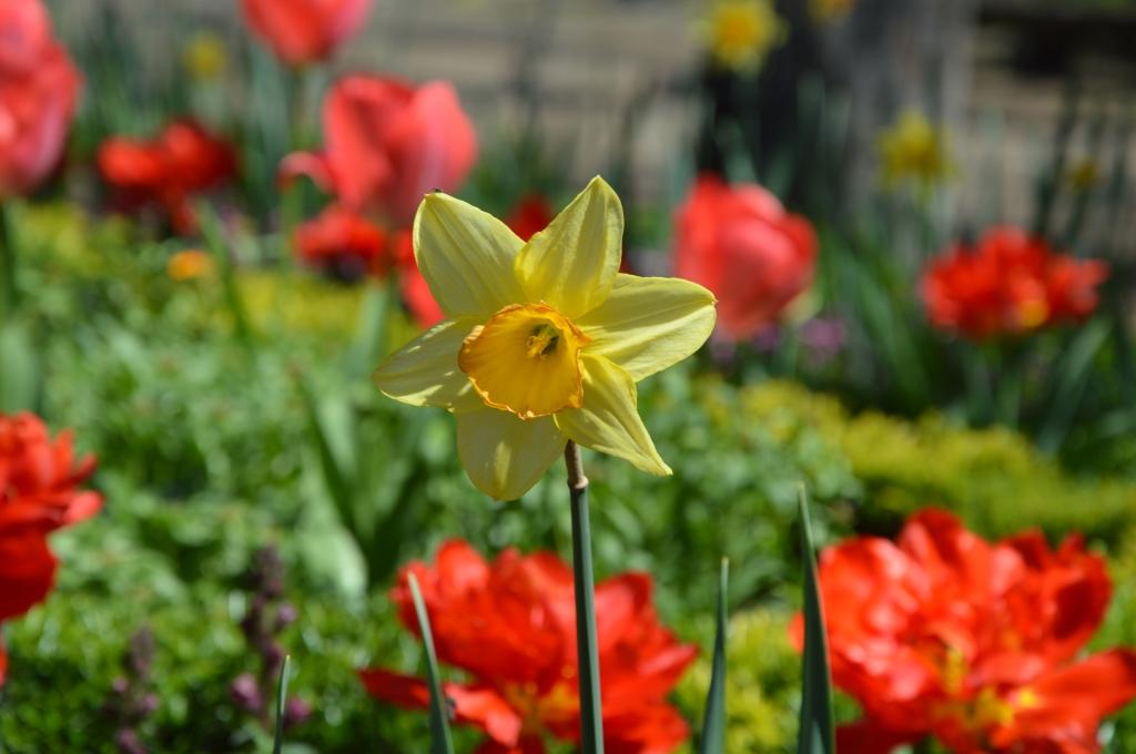 flower2 42015