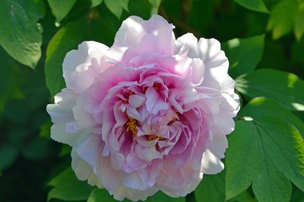 flower2 4-2015