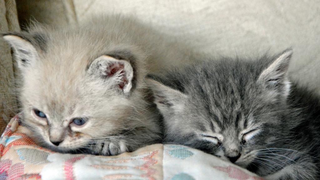 kittens3 52015