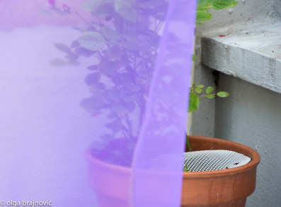 purple (1 of 1)-6