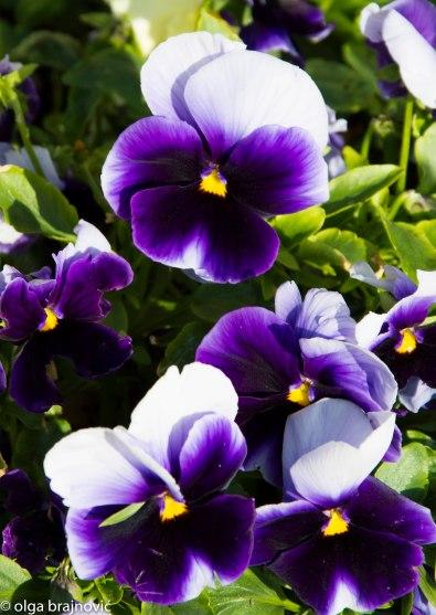 purple (1 of 1)