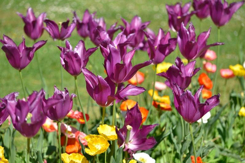 flores ciudadela_00004